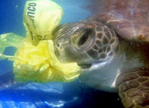 plasticbag and turtle